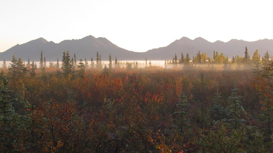 Autumn Morning Mist Kobuk Valley National Park