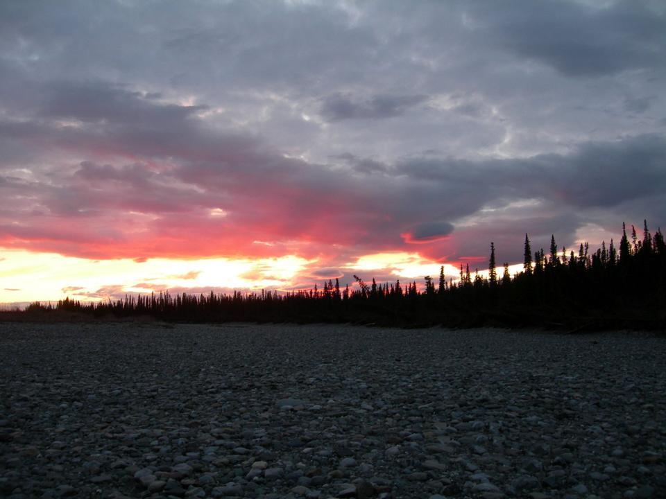 sunset silouhettes the trees