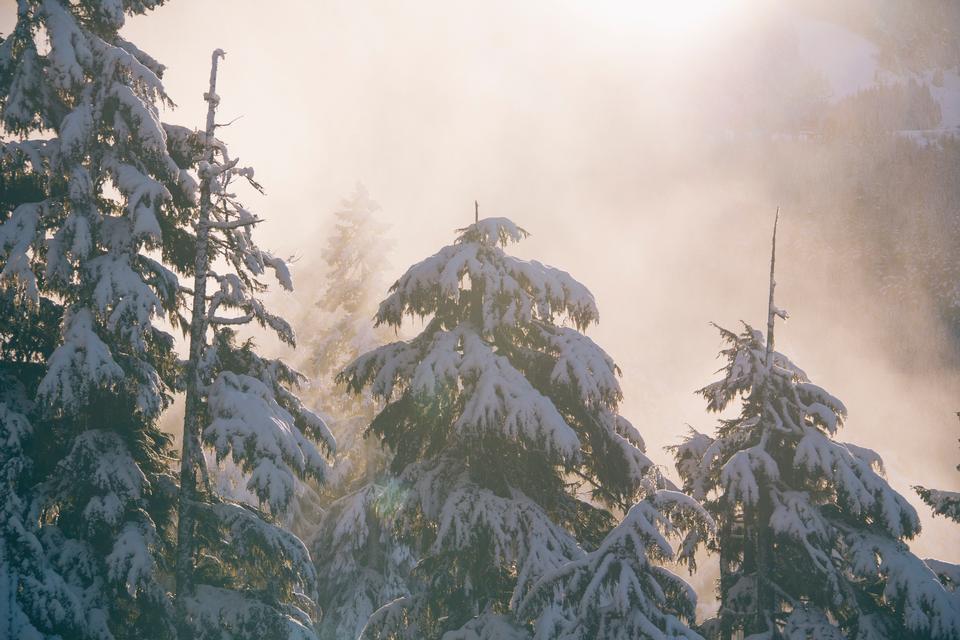 冬の樹氷と雪に覆われた木のトップス曇り空