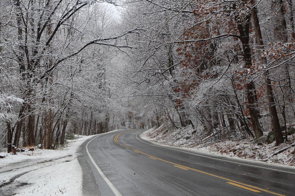 Frosted Baum in Shenandoah Nationalpark