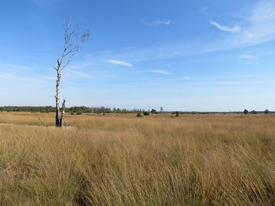 农村湖泊和河流被色彩缤纷的草原包围