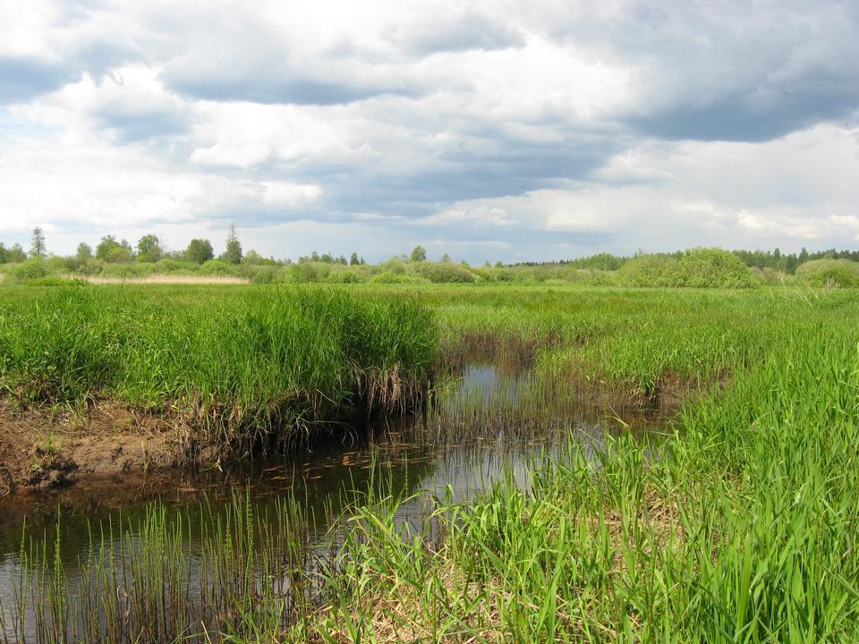 Stagno e Grassland