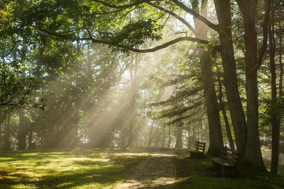 La luce del sole splende attraverso gli alberi