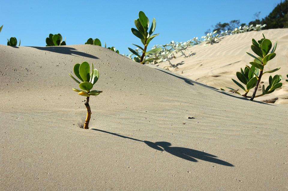 アフリカの砂漠の風景の中にツリー