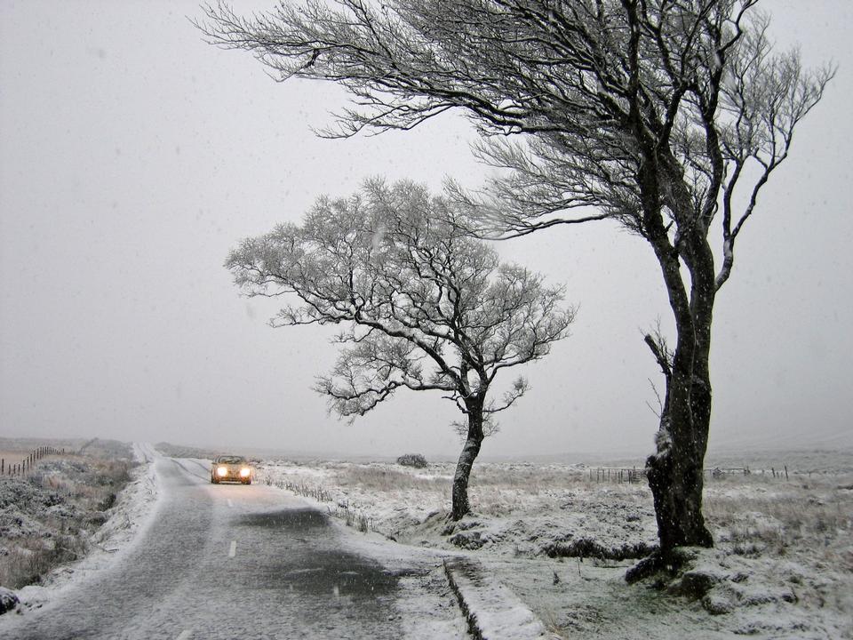 inverno scenico natura cattura di foresta passeggiata in Irlanda