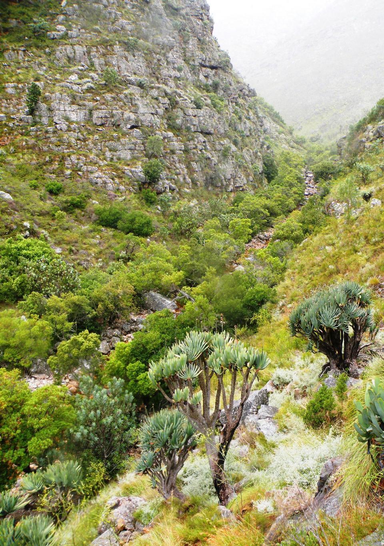 步道。西開普省山區。南非