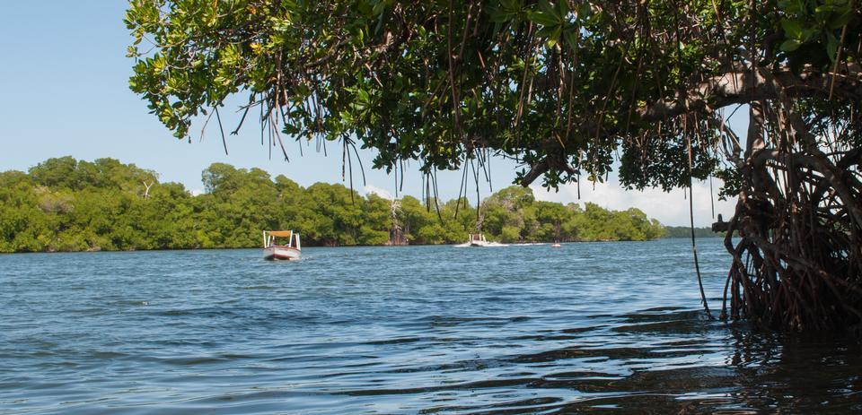 拉古納 - 拉雷斯廷加在瑪格麗塔島國家公園
