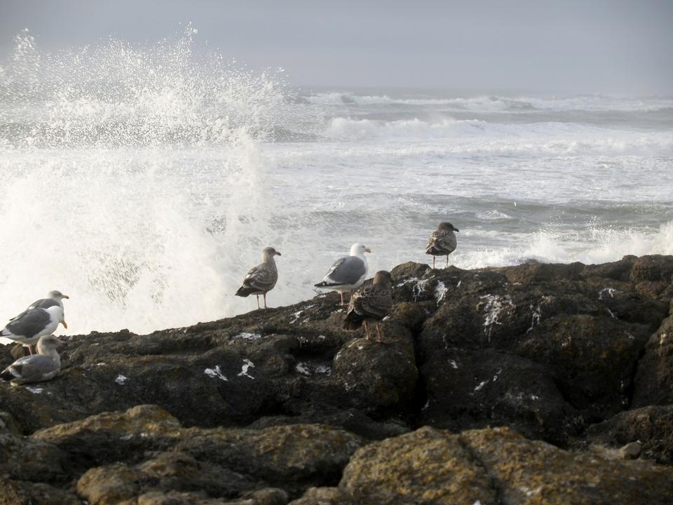 Seagulls and the Waves