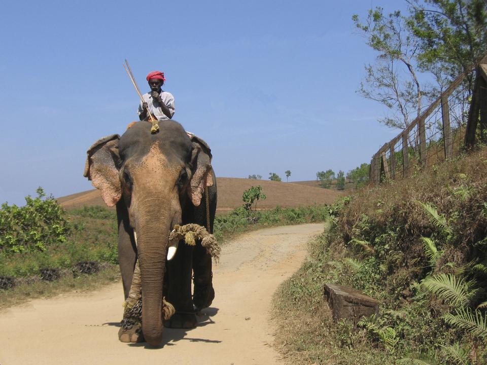 Elephant and mahaut  driver