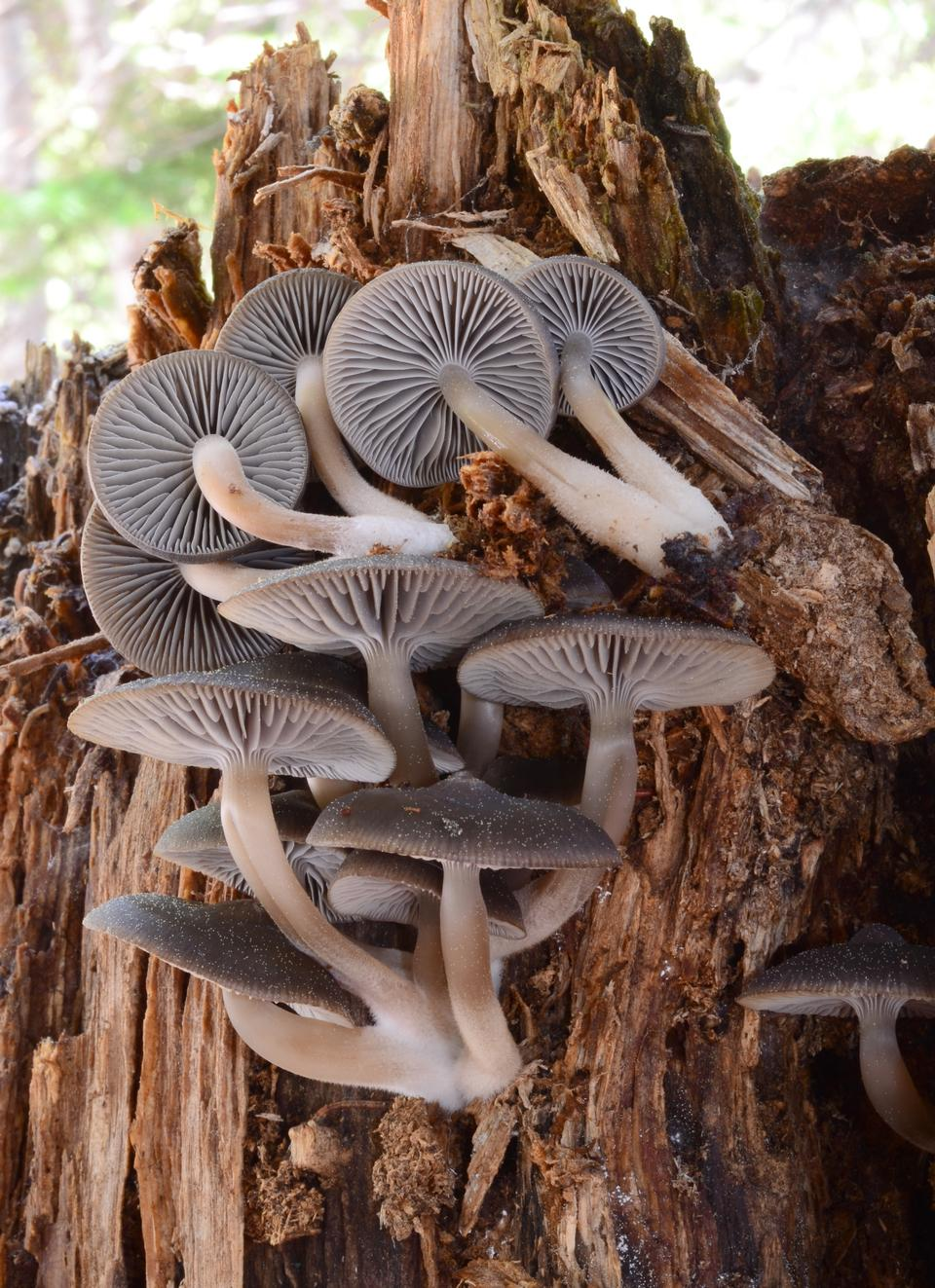 在树上的蘑菇