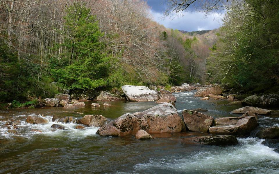 Williams fiume nella foresta nazionale di Monongahela