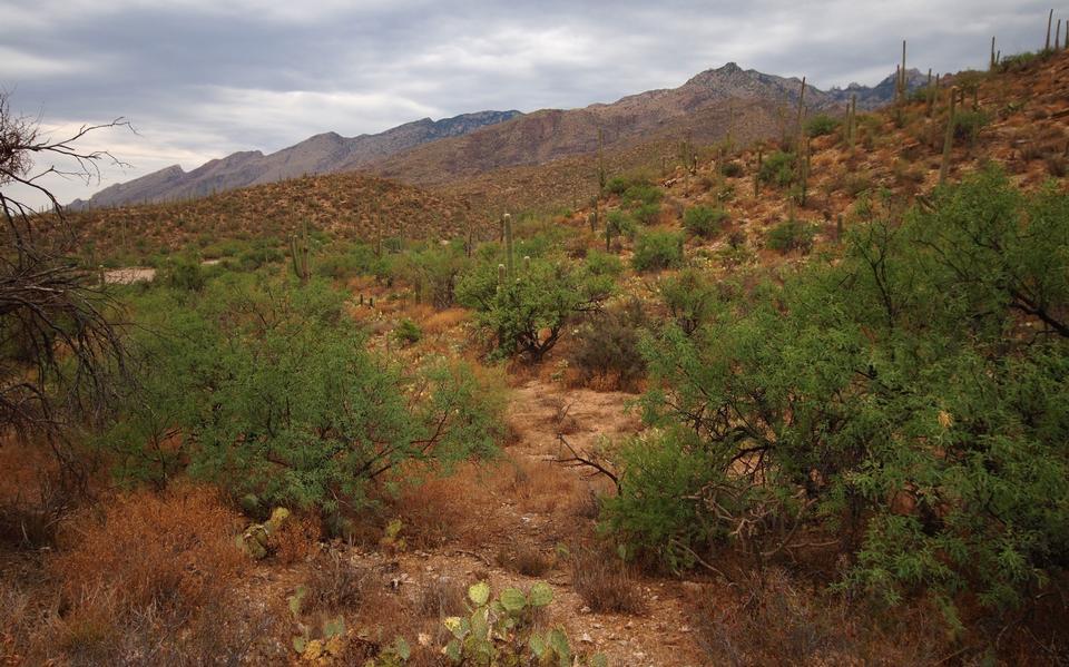 萨比诺峡谷步道在亚利桑那州图森