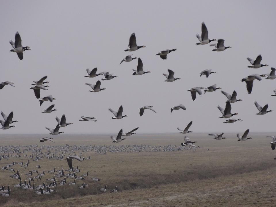 沼の上の鳥の群れ