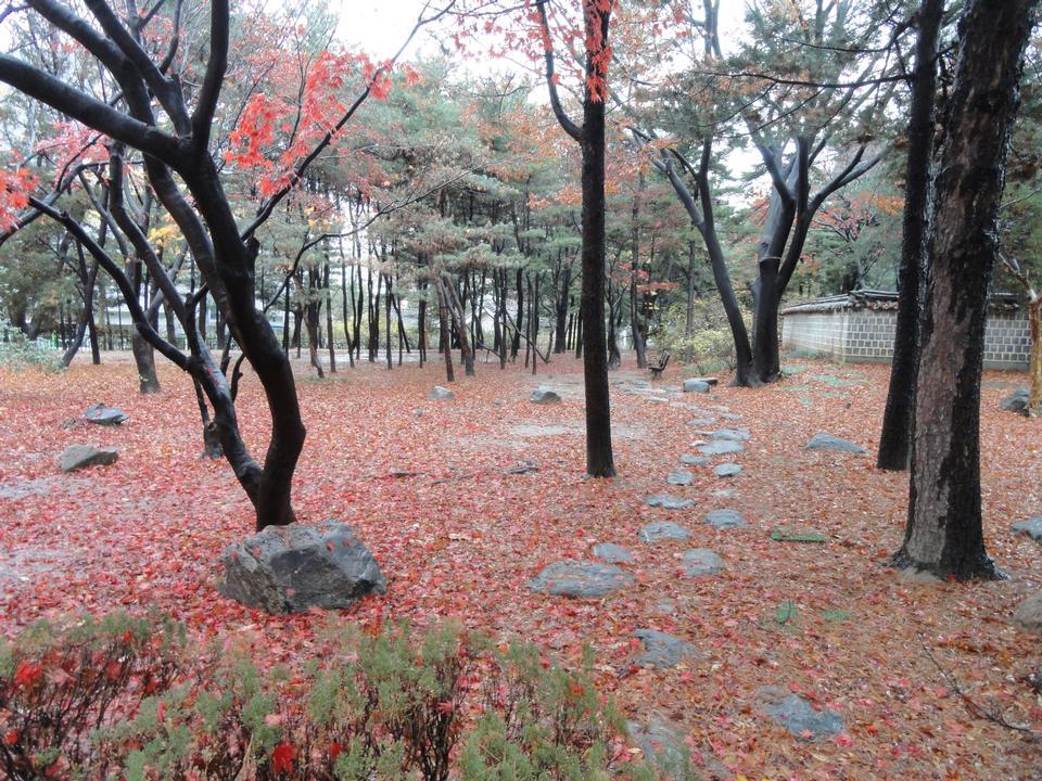fallen leaves in Dosan Memorial Park