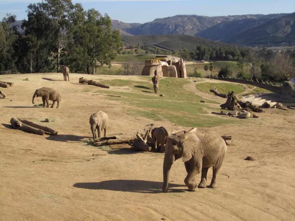 アフリカゾウの母親と赤ちゃん