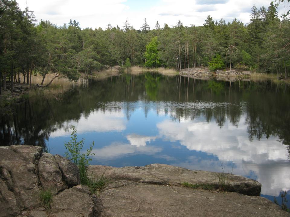 表面にミラー化されている木々に囲まれた池
