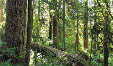 Descarga gratis la imagen de alta resolución - Bosque en el Parque Nacional Olympic