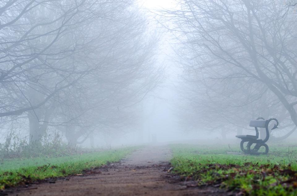 banc et tunnel entre les arbres dans le brouillard dense