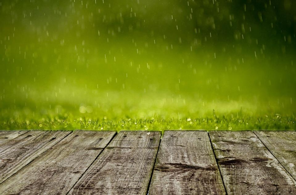 Lush green grass with falling drops