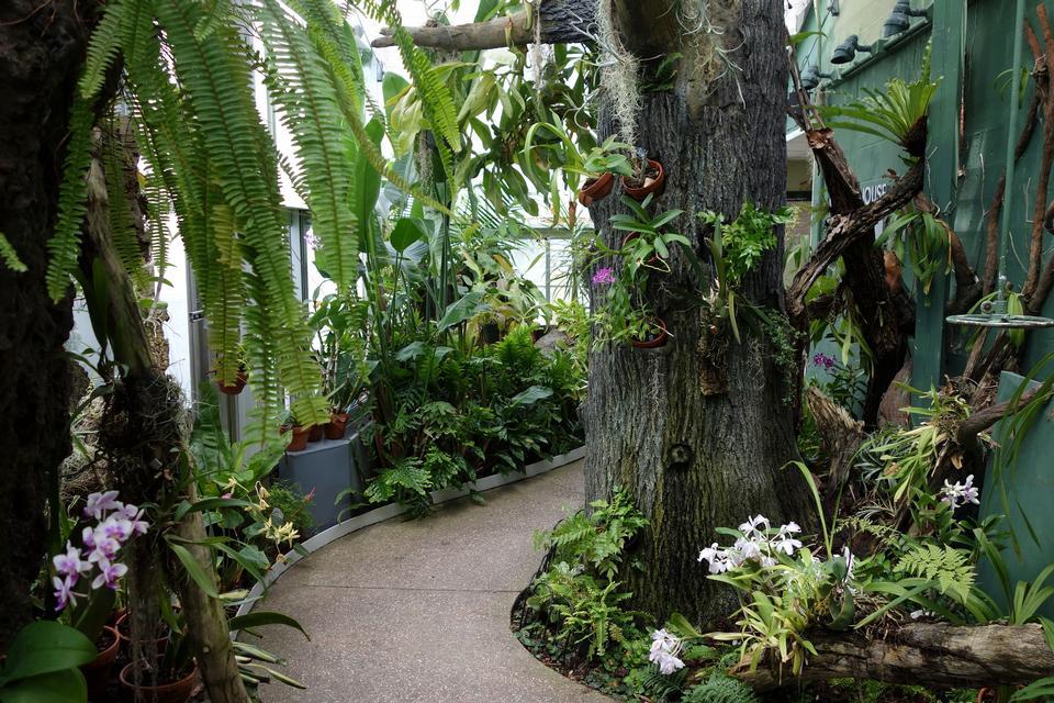 Vivero de plantas de la orquídea