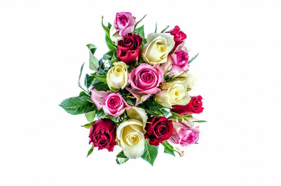 Rosen isolieren