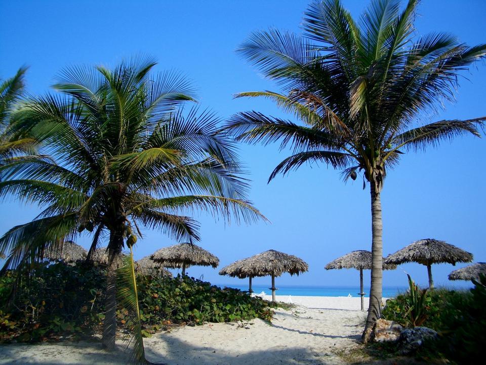 Vue de la plage de Varadero à Cuba avec un arbre de noix de coco