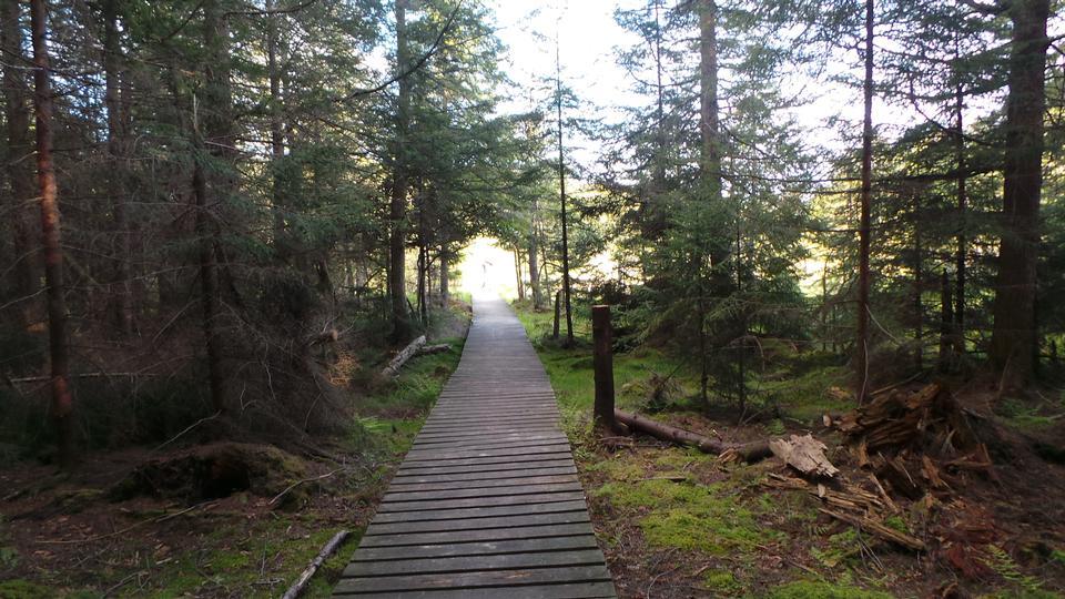 wooden walk way through the forest