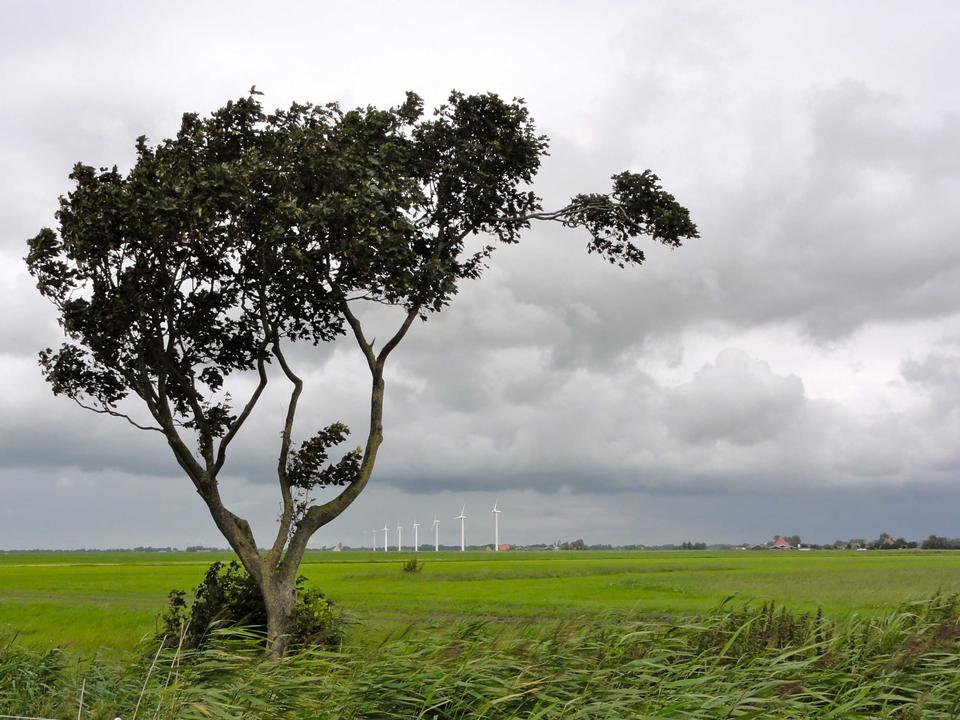 Wind turbines in Frisian countryside, Netherlands