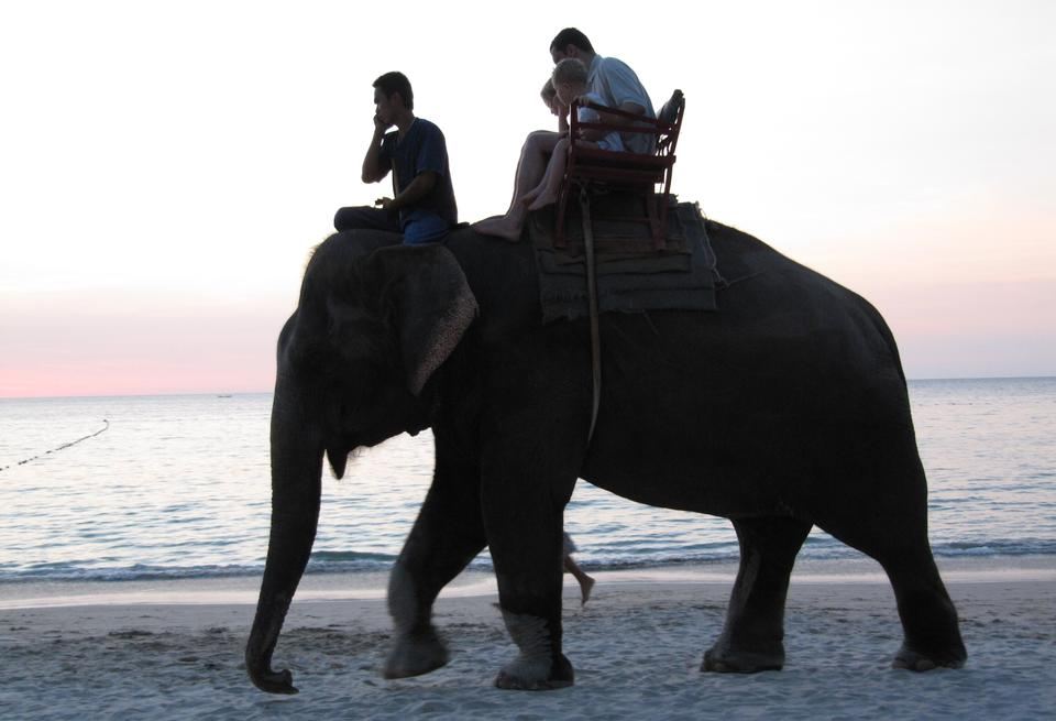 Thai Elephant trekking