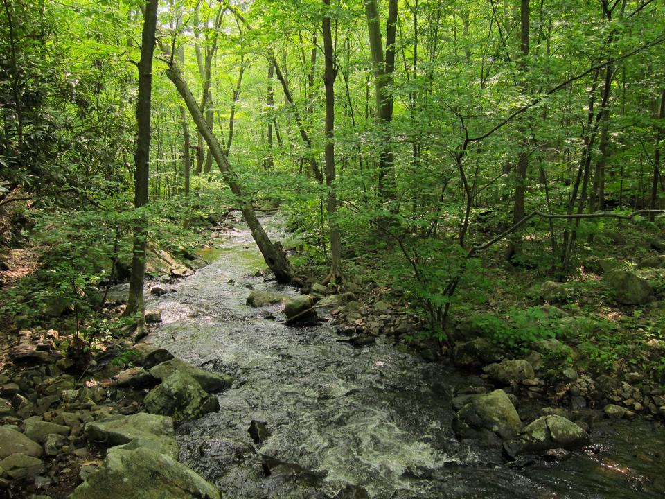 Norvin綠州森林步道下