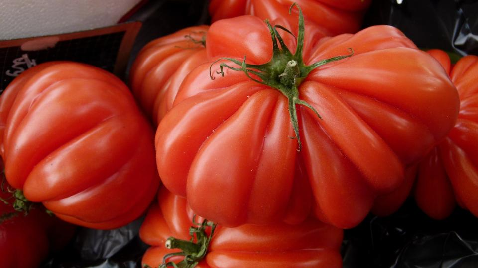 Large ripe red heirloom tomato