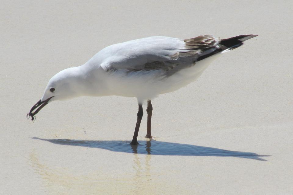 海鷗在海灘