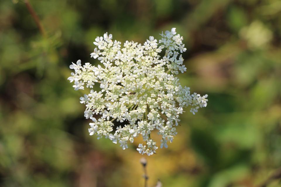 흰 꽃 매크로 자연에 가까이