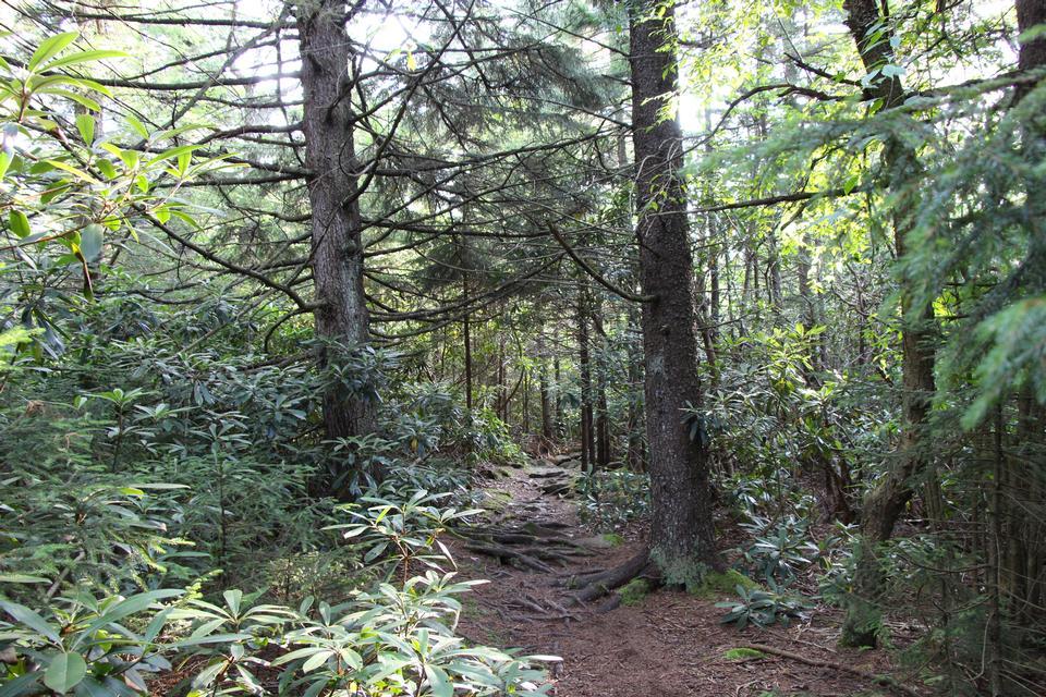green rainforest path Rohrbaugh Plains in West Virginia