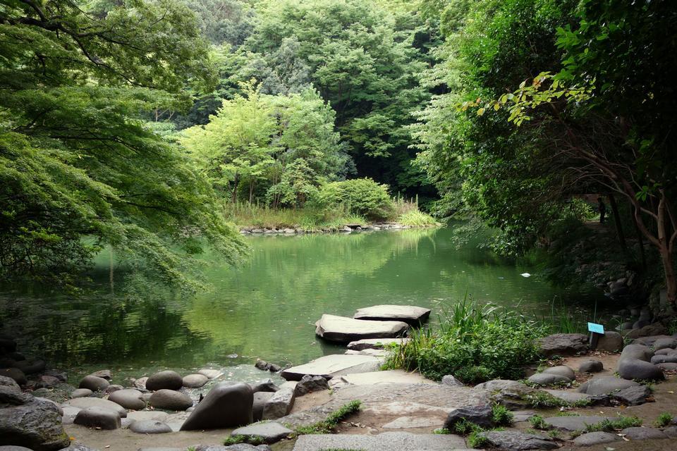 Sanshiro Pond Tokyo, Japan
