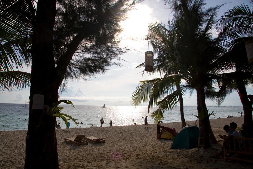 하얀 모래 해변에서 아름다운 팜, 열 대 자연