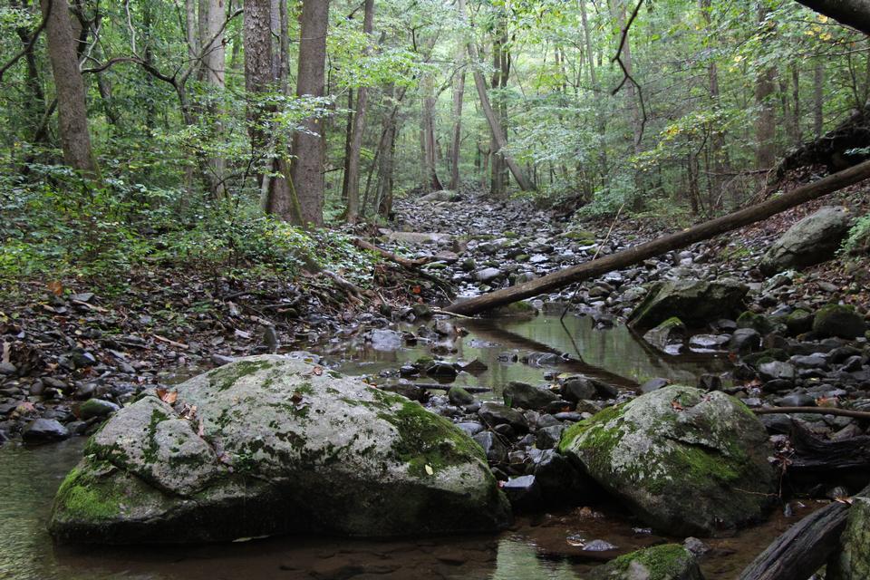 Trail Piney BR Shenandoah Parco