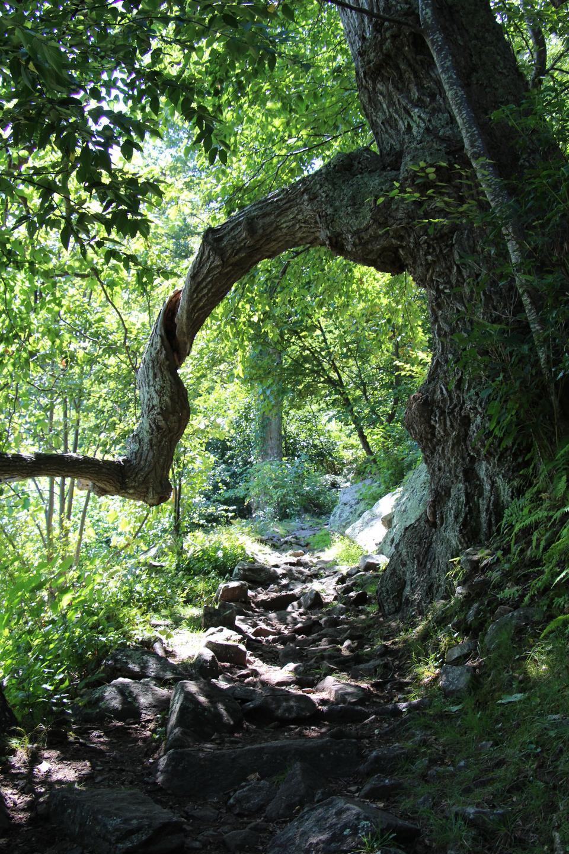 Craggy Gardens Appalachian Hiking Trail