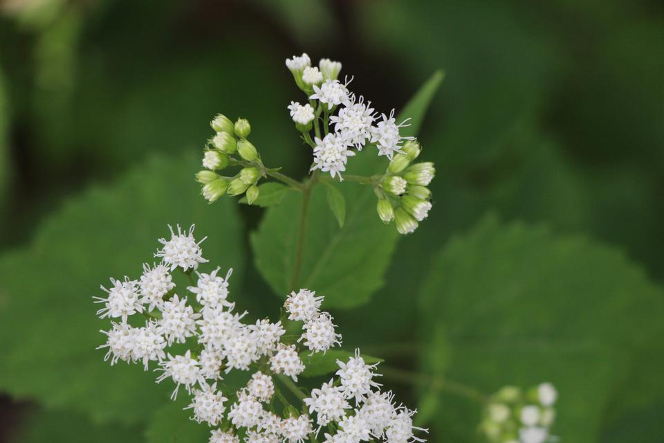 white high-desert wildflower nestled