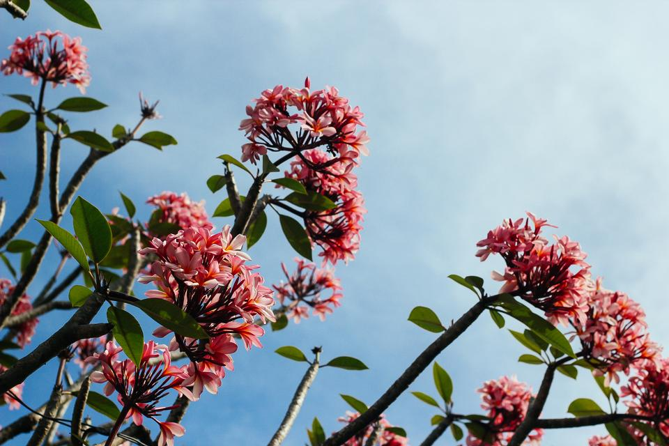 Flowers on a branch against sky