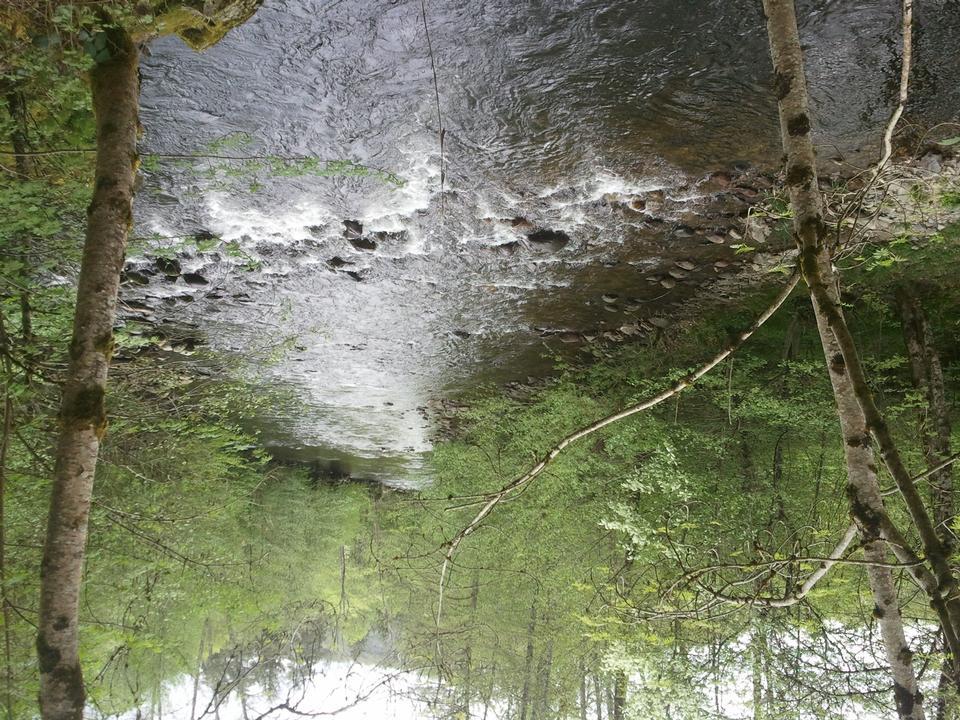 初夏的一条小溪的水