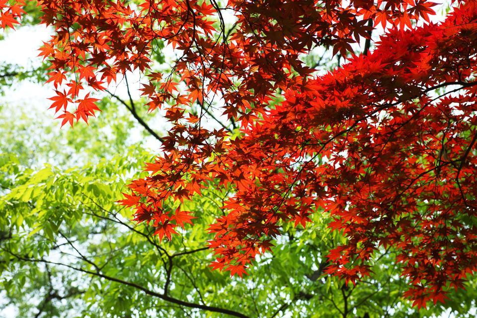 朝の公園で秋