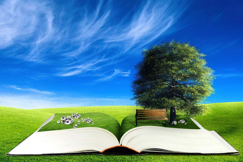 open book with tree and bench on the meadow. 3d concept