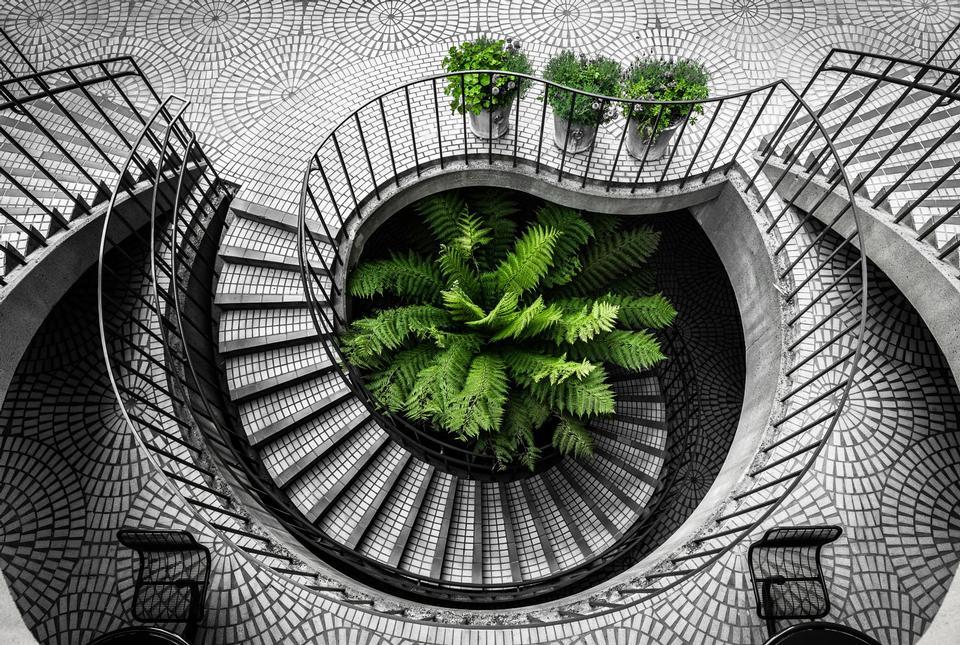 緑の植物と灰色の階段
