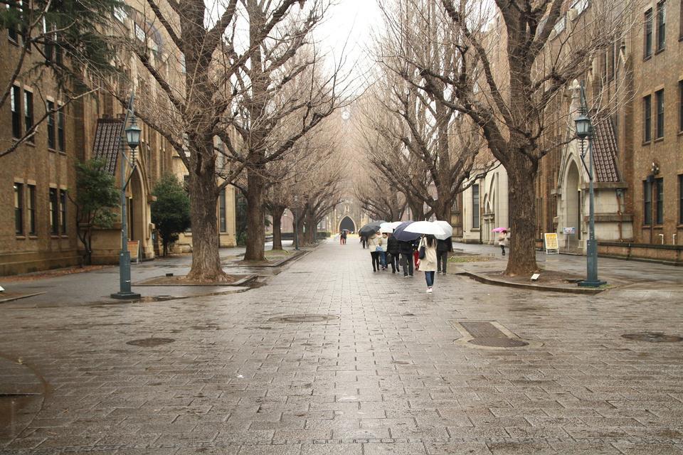 The University of Tokyo in Bunkyo, Tokyo, Japan