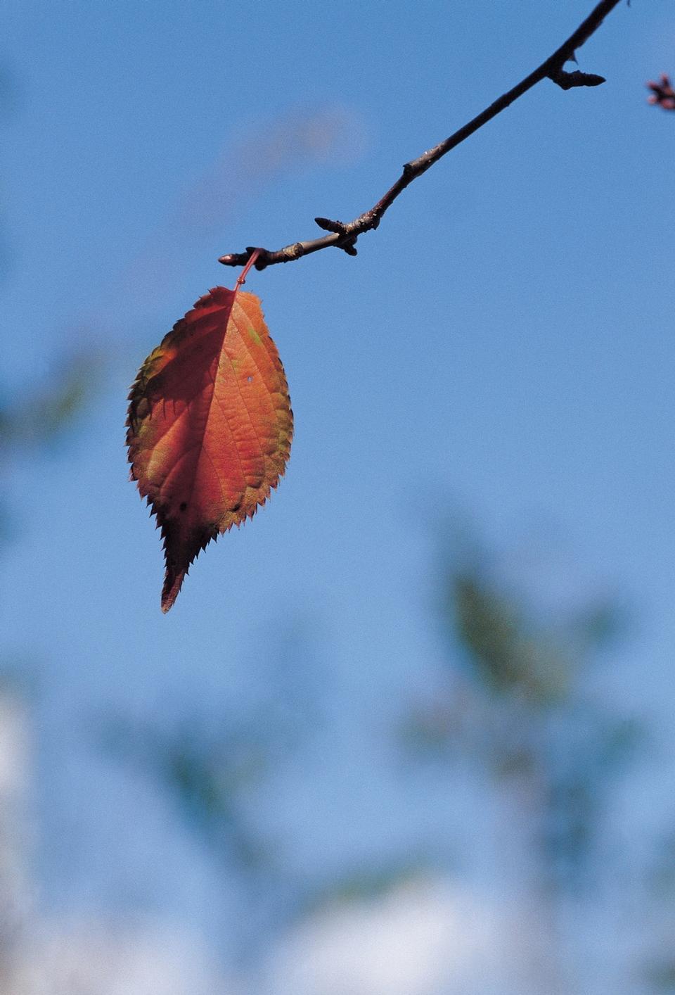 Colorful autumn leave