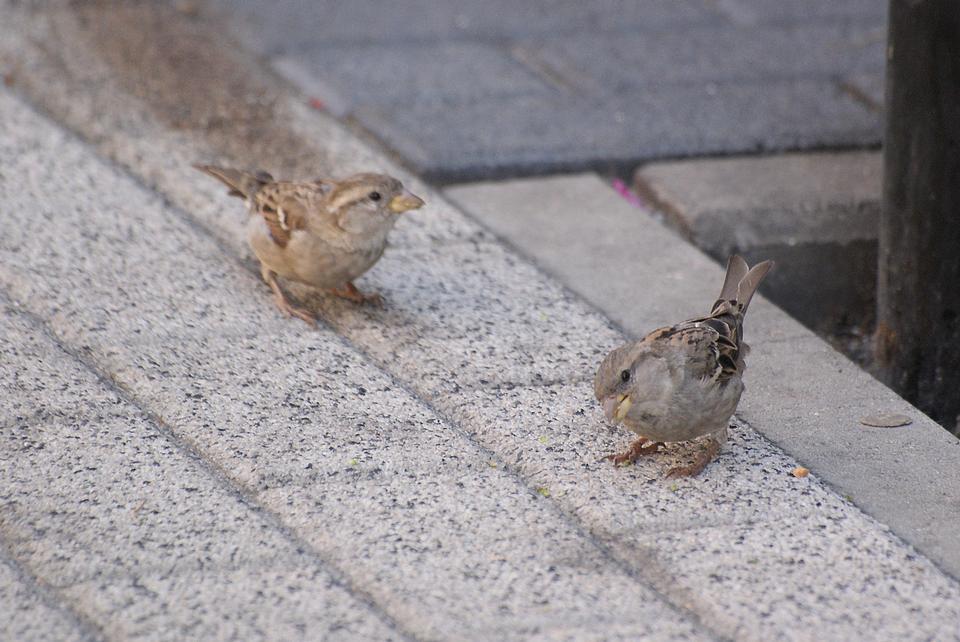 Due piccoli uccelli