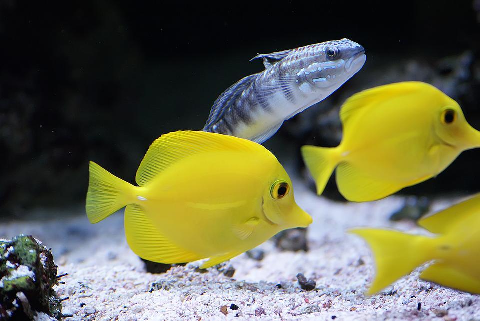 pececitos lindo en un acuario