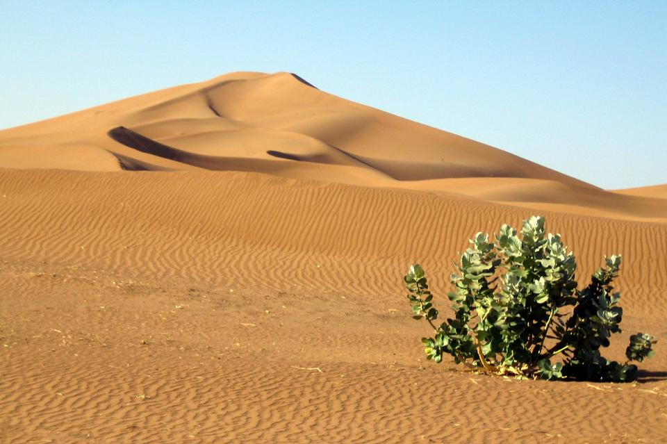 サハラ砂漠のモロッコの砂丘
