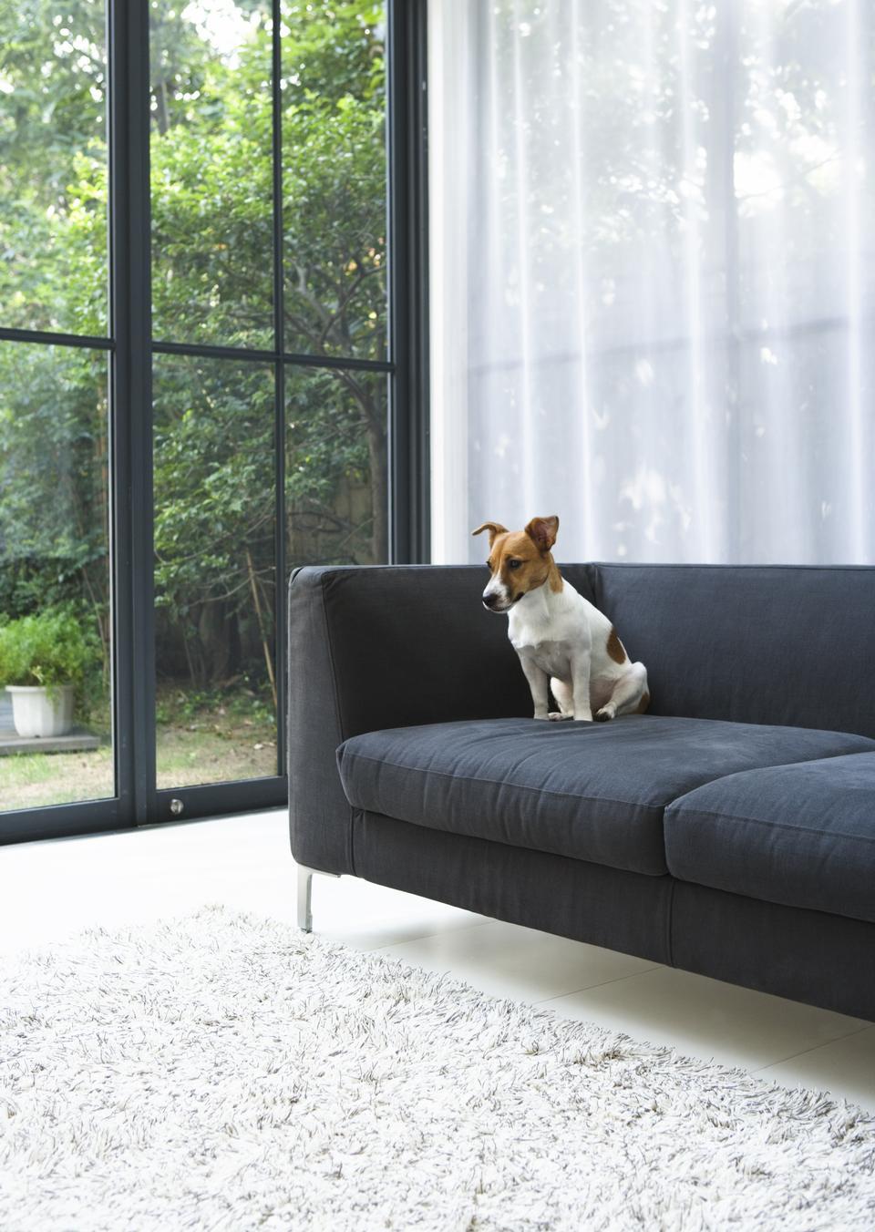 座って犬と一緒に現代的なリビングルーム